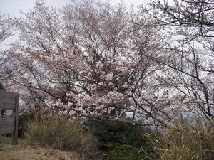 20140405_nijouzan09