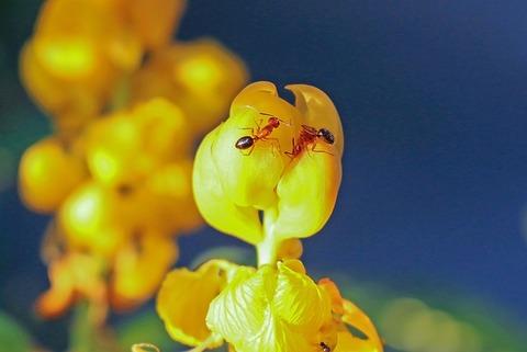 fire-ants-1692628_640