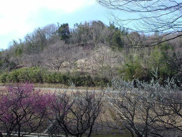 寺家早春の梅