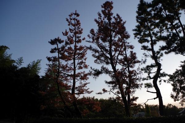 松の木緑地2