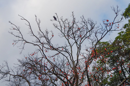crow in witer