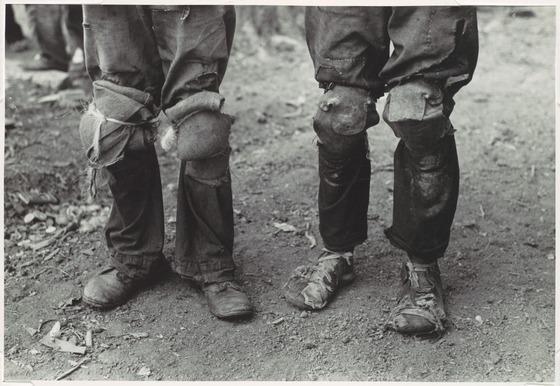 1938綿摘み