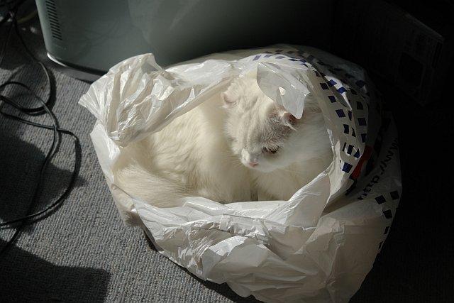 ビニール袋の中のハナ