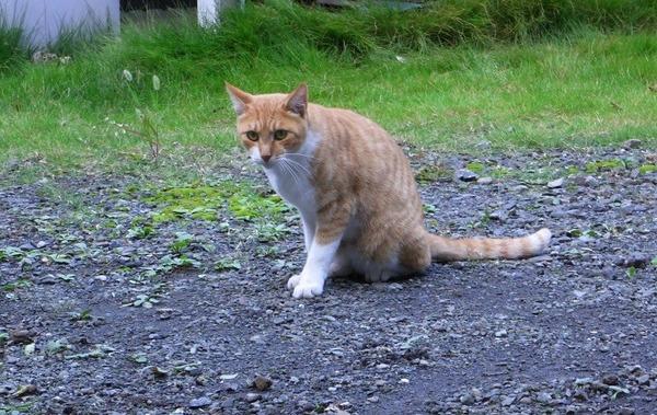 私は好奇心の強い猫