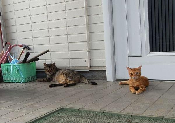 wさんちの新しい猫たち