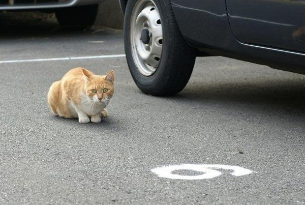 また会った多分団地の猫