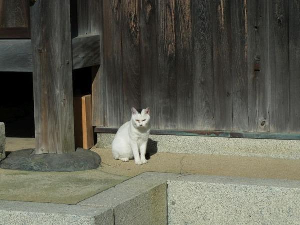 神社のネコ