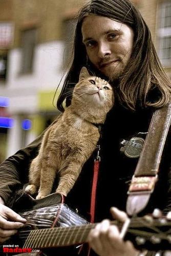 やっぱり猫は特別
