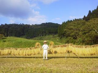 稲束とハサ