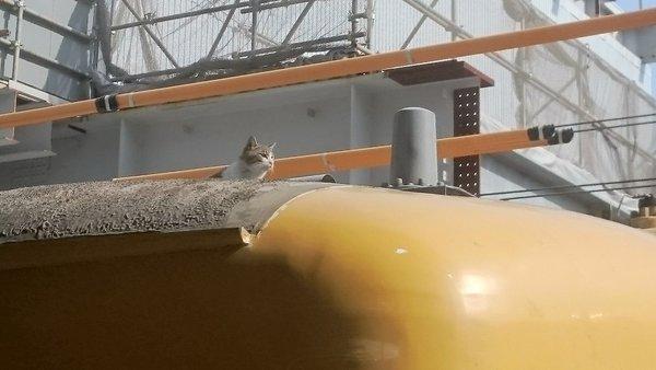 電車猫広島2