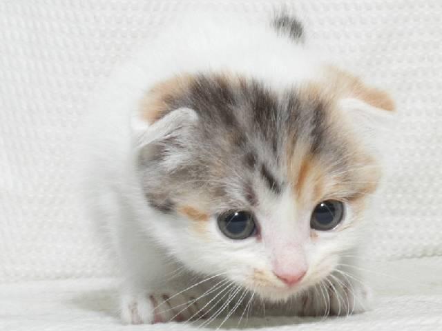 猫_かわいい