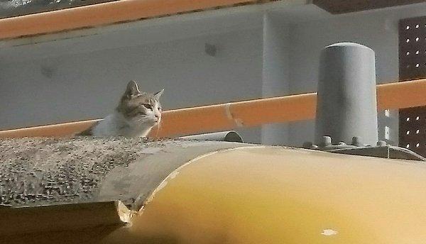 電車猫広島