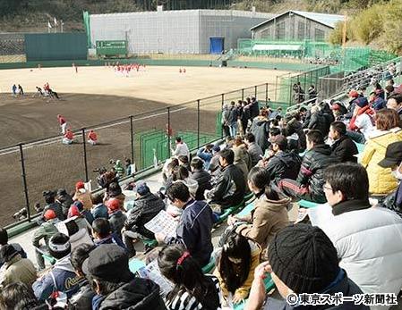 宮崎_日南キャンプ_カープファン