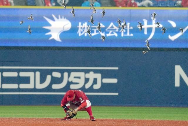 広島横浜戦鳥の群れ襲来横浜スタジアム上空を旋回し試合中断