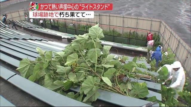 広島市民球場ライトスタンド草刈りボランティア