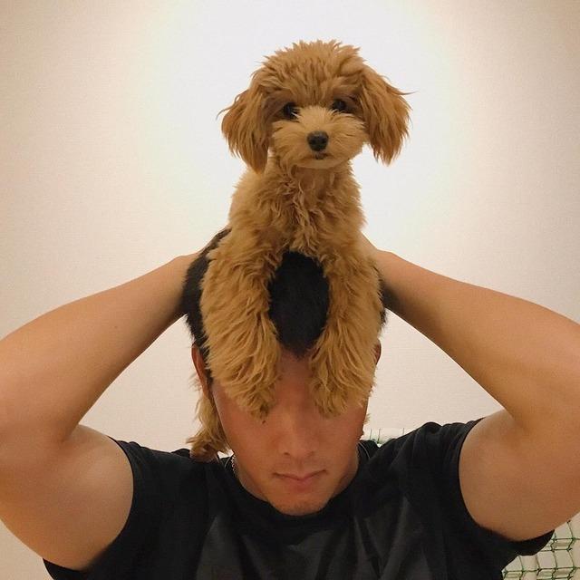 薮田和樹_犬