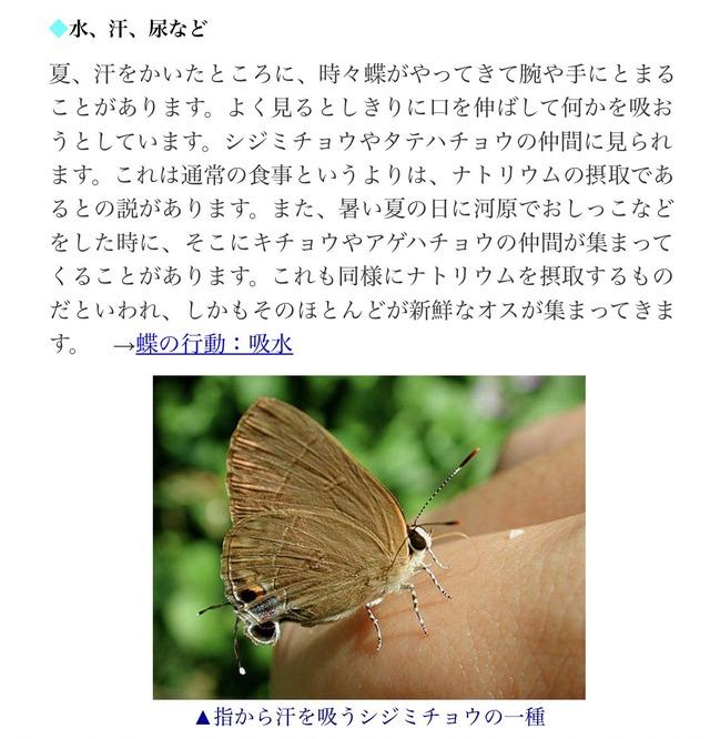 菊池保則_アゲハ蝶_02
