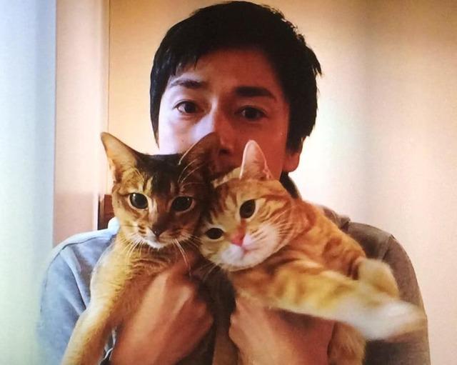 徳井ミコライオ猫