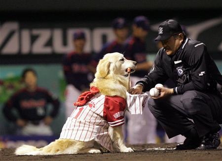 ベースボール犬_ミッキー