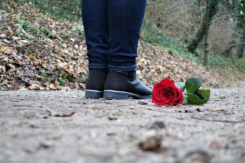 red-rose-on-the-floor-3007761_640