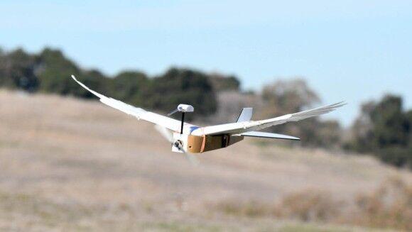 未来のドローンは鳥型になるかも?鳩の翼を持ち機敏に空を飛び回れるハトボット(PigeonBot)