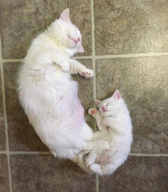 母猫と子猫の寝姿があまりにもかわいかったのでコラ職人がんばる