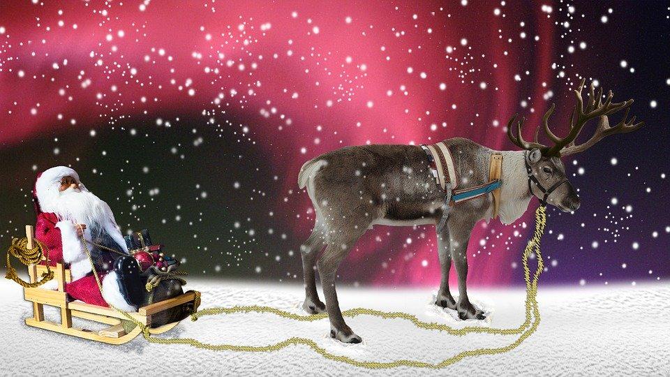 サンタさんのそりを引くトナカイに信じられない衝撃的事実が発覚する