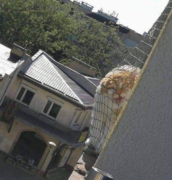 隣人、それは近くて謎めいた存在である。12のお隣さんエピソード画像