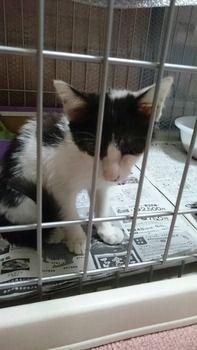 新しい子猫を施設から貰ってきたった(※画像あり)