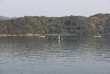 内の海の釣り屋台