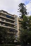 建物を超える街路樹