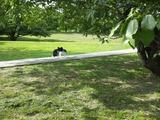 5-5-9 ハンガリーの犬