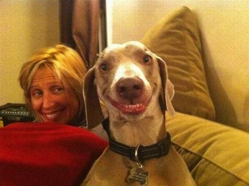 smile_dog