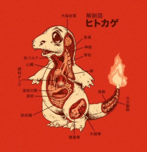 charmander_anatomy_by_rye_bread-d5880yg