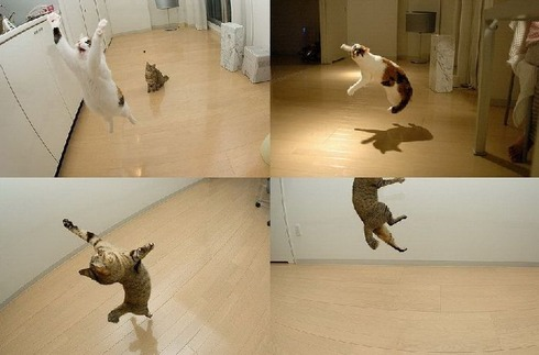 flying_cats_01