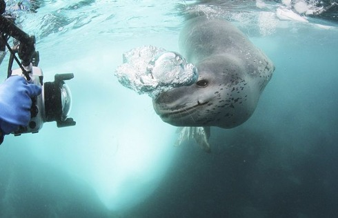 swimming_into_jaws_of_death_09