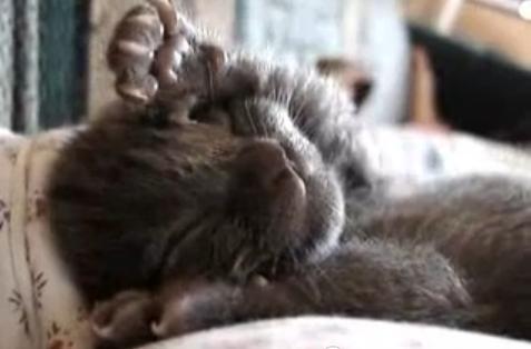 Wilbur napping
