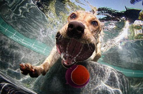 underwater_dogs_08