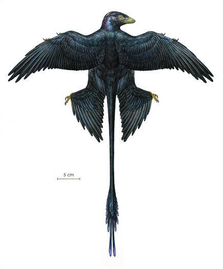 fossil-dinosaur-iridescent-feathers-full-body