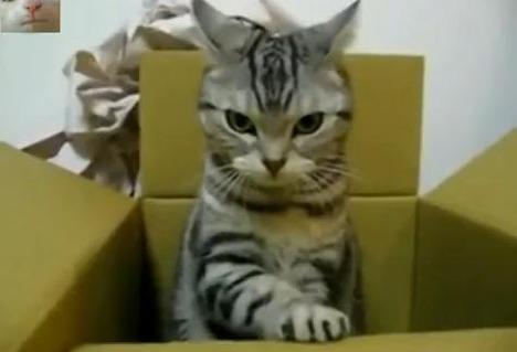 sos_cat