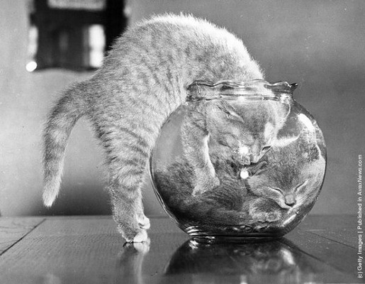 Interesting Old Photos of Cats (10)