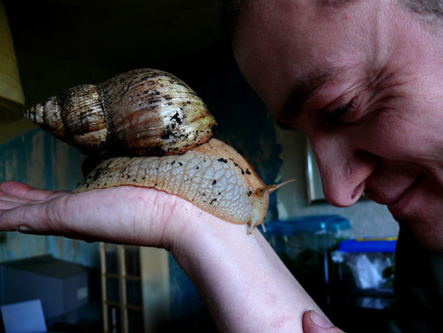 giant-african-snail-6