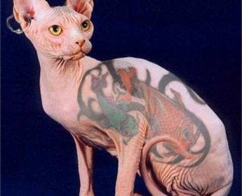 Tattooed-animals-02