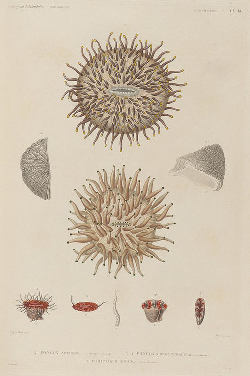 The Astrolabe Molluscs 24