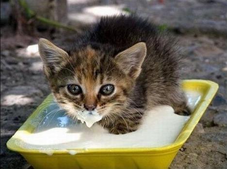 blog-bu_cat10