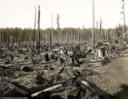 lumberjacks-redwood-0[2]