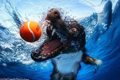 underwater_dogs_17
