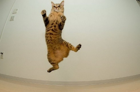 flying_cats_06