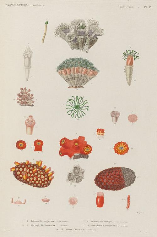 The Astrolabe Molluscs 25