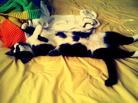 blog-bu_cat24